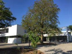 Gebäude in Ulm Ausbildungszentrum